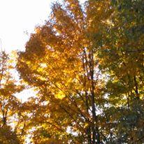 foliagegold1