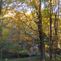 foliagegold3