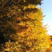 foliagegold4