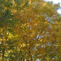foliagegold6