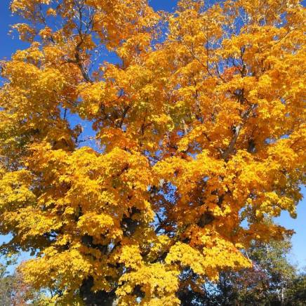 foliagegold8